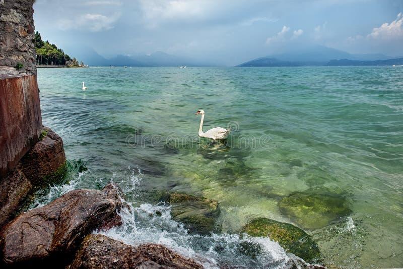 Красивый ландшафт воды с лебедем в Sirmione на озере Garda, Италии На солнечный летний день стоковое фото