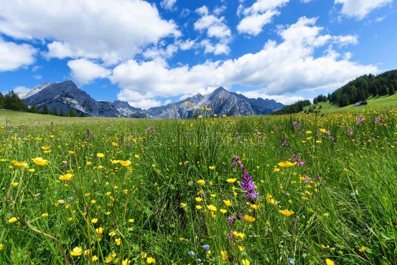 Красивый ландшафт горы в Альпах с полевыми цветками и зелеными лугами Walderalm, Австрия, Тироль стоковые изображения rf