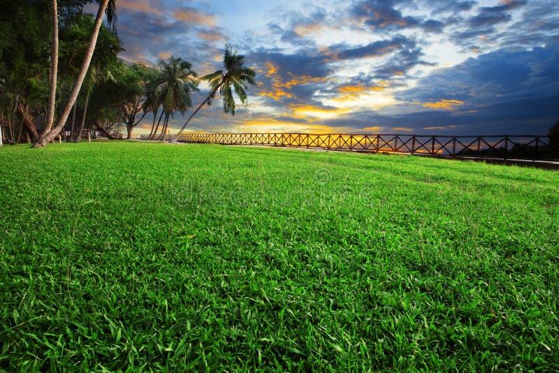 Красивый ландшафт парка поля зеленой травы против dusky неба стоковые изображения