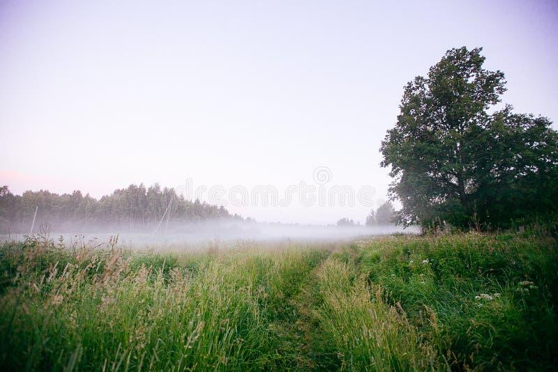 Красивый ландшафт падения осени восхода солнца сильного тумана над wi полей стоковые фотографии rf