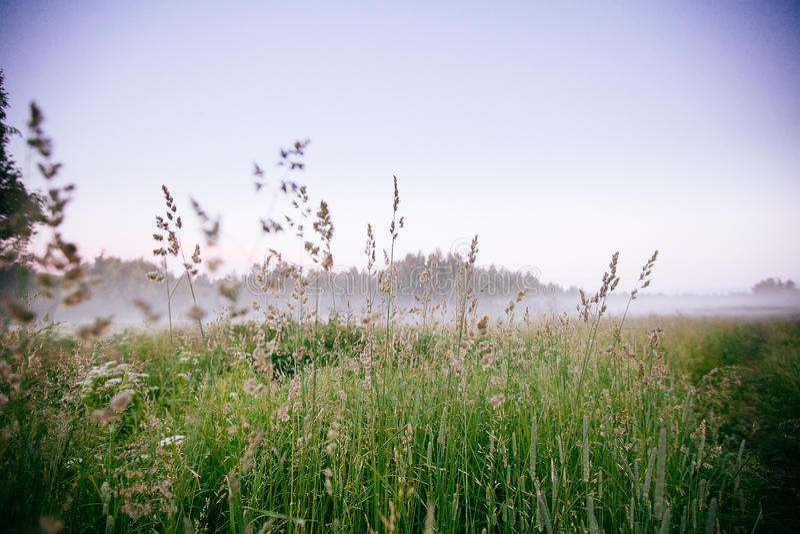 Красивый ландшафт падения осени восхода солнца сильного тумана над wi полей стоковые изображения