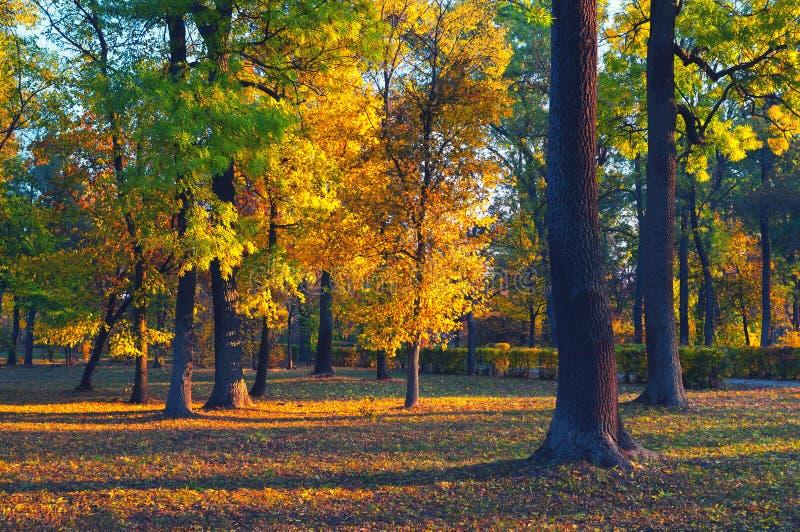 Красивый ландшафт показывая лес на солнечный летний день стоковая фотография rf