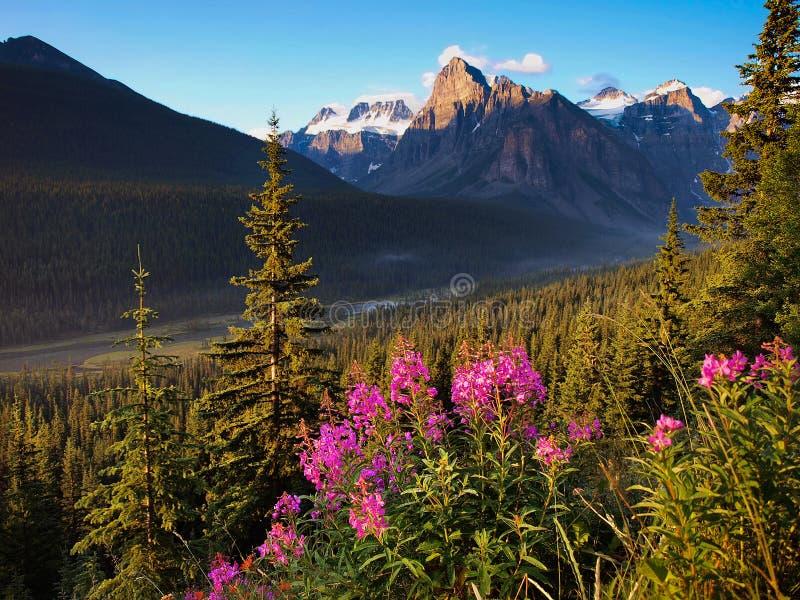 Красивый ландшафт с утесистыми горами на заходе солнца в национальном парке Banff, Альберте, Канаде стоковые фото