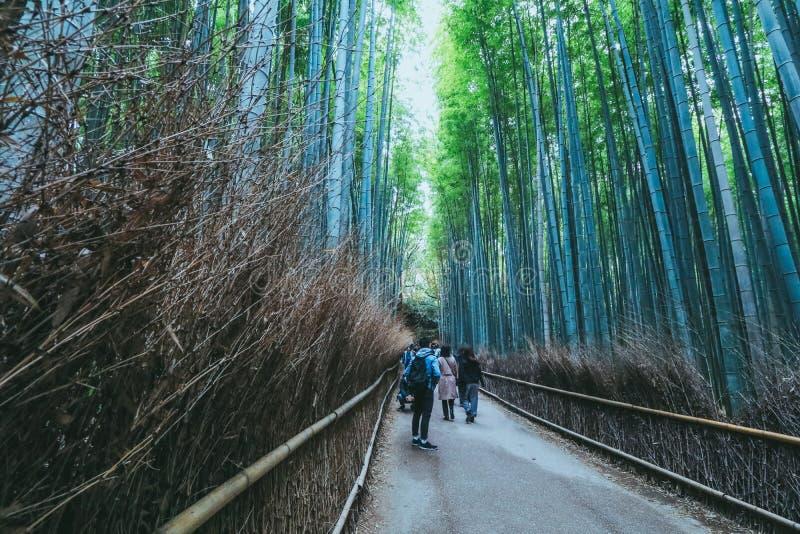 Красивый бамбуковый лес на Arashiyama, Киото, Японии стоковые изображения
