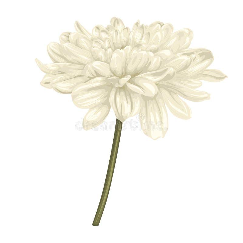 Download Красивый бежевый георгин с влиянием изолированного чертежа акварели на белой предпосылке Иллюстрация штока - иллюстрации насчитывающей элегантность, рука: 41650186