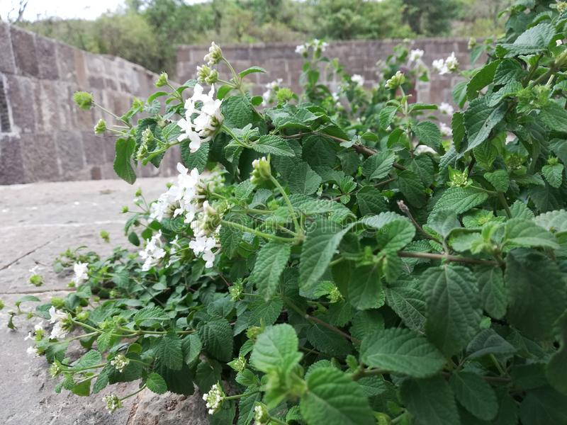 Красивый белый цветок стоковая фотография rf