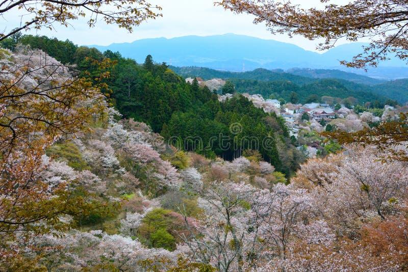Красивый белый ландшафт вишневого цвета на держателе Yoshino в Nara, Японии стоковое изображение rf