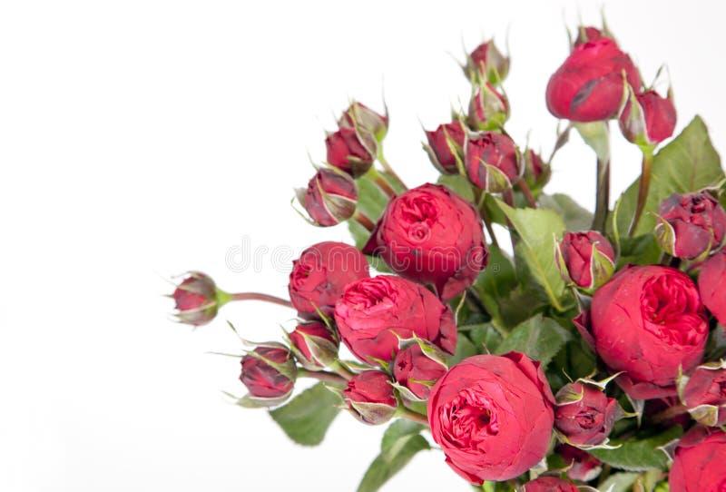 Красивый букет пиона роз стоковые изображения