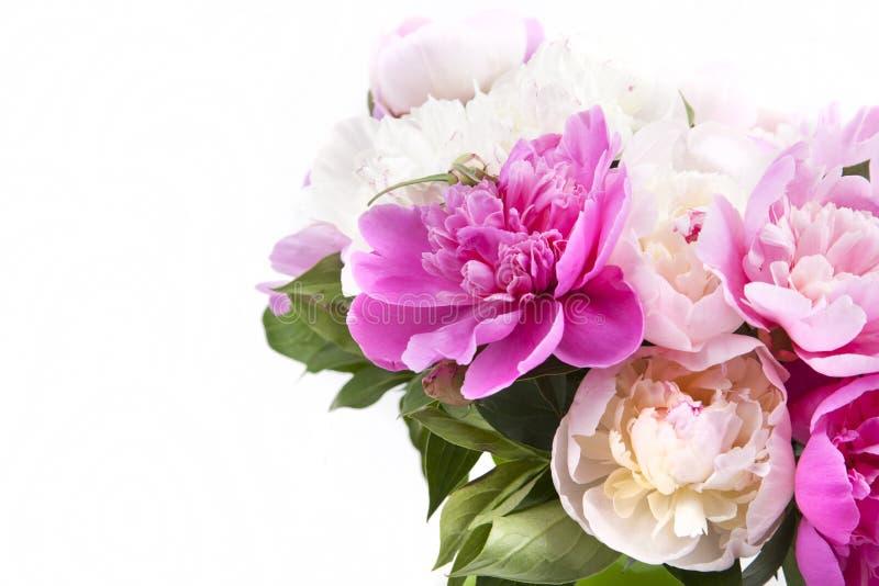 Красивый букет розовых и белых пионов стоковая фотография rf