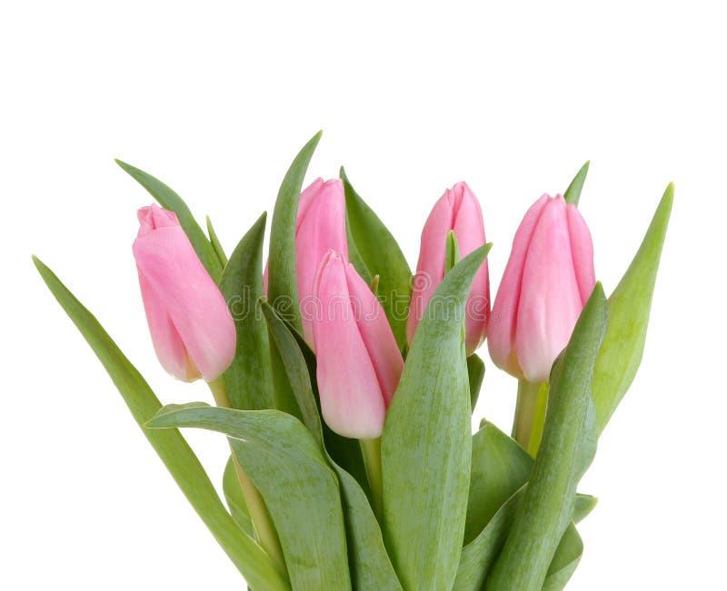 Красивый букет цветков розовых тюльпанов на белой изолированной предпосылке праздники весны стоковые изображения rf