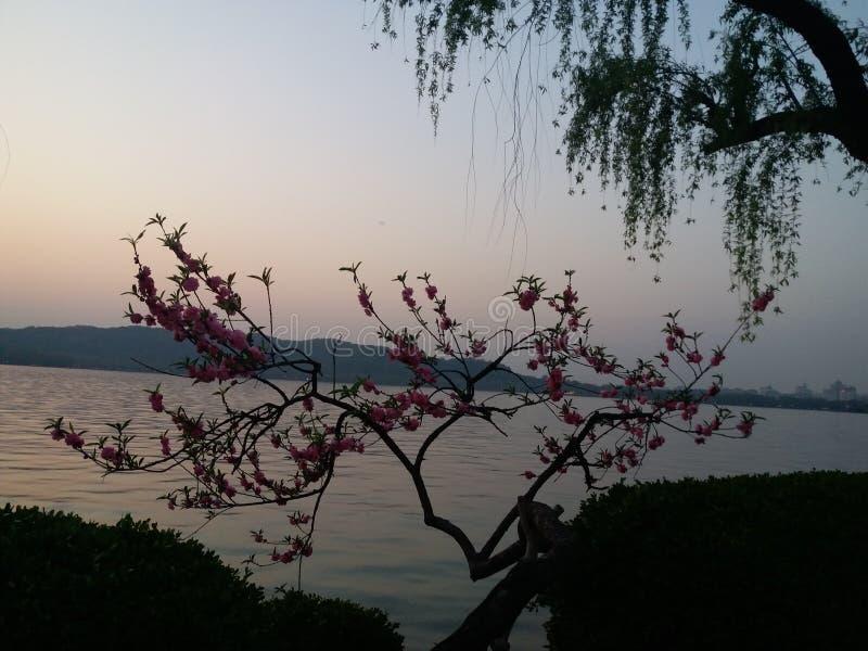 Красивый вечер на западном озере, Ханчжоу, Китай стоковое изображение rf
