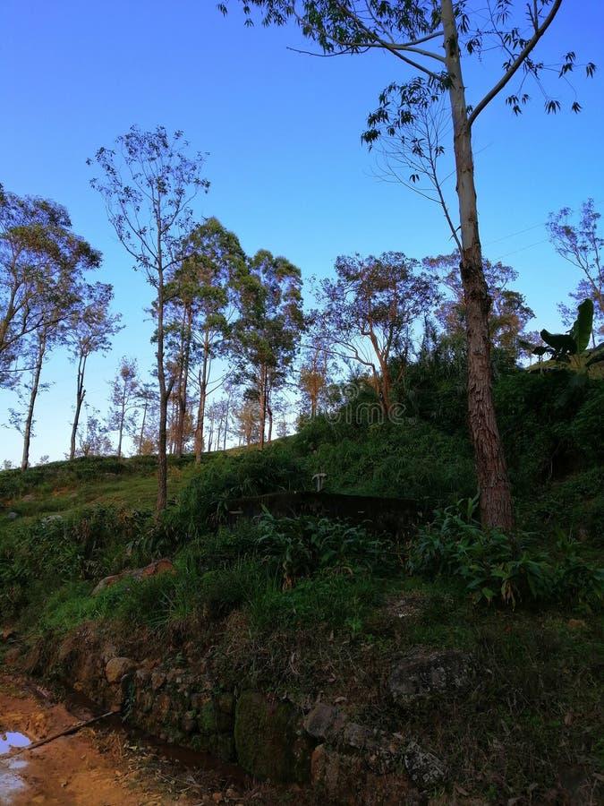 Красивый вечер eliya Шри-Ланка Nuwara стоковые фотографии rf