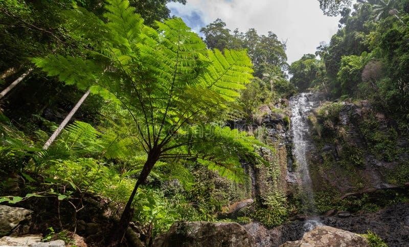 Красивый взгляд ландшафта леса со славными деревьями и водопадом стоковое изображение