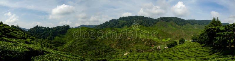Красивый взгляд на гористых местностях Камерона, Малайзия панорамы с зеленой плантацией чая природы около холма стоковое фото rf
