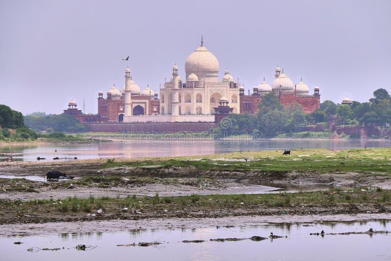 Красивый взгляд утра дворца Тадж-Махала с рекой Jamuna на переднем плане стоковые фотографии rf
