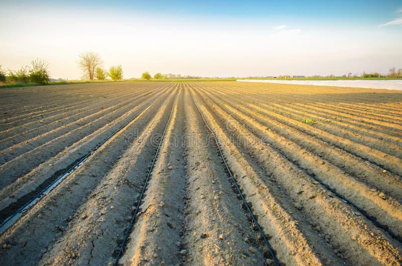 Красивый вид вспаханного поля на солнечный день Подготовка для засаживать овощи r Сельскохозяйственные угодья Мягкое выборочное стоковое фото rf