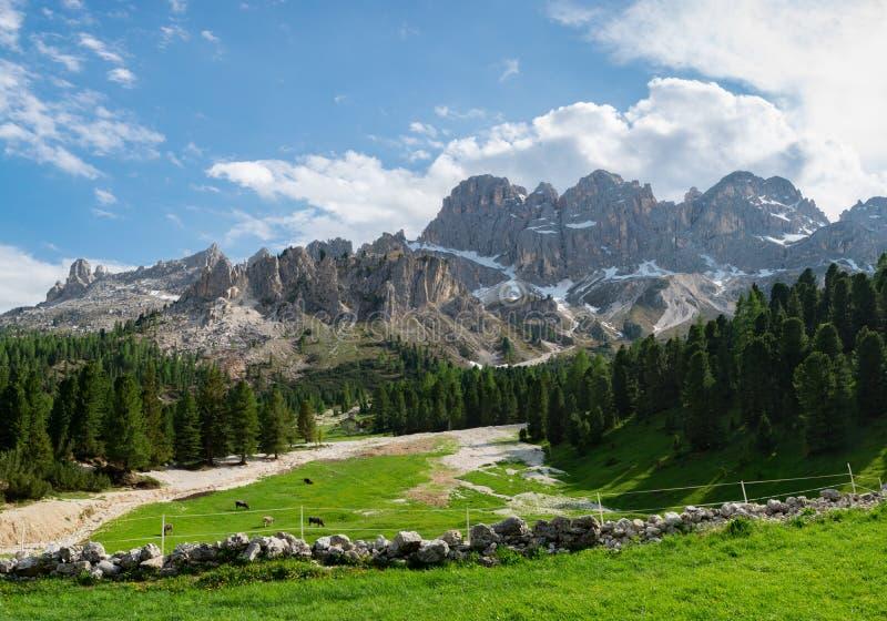 Красивый вид высокогорного выгона с коровами в доломитах, Италия стоковые изображения