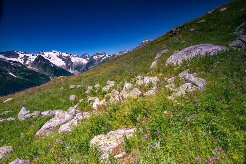 Красивый вид высокогорных лугов в горах Кавказа стоковое изображение