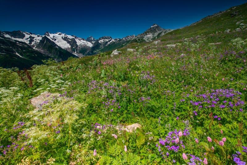 Красивый вид высокогорных лугов в горах Кавказа стоковые фотографии rf