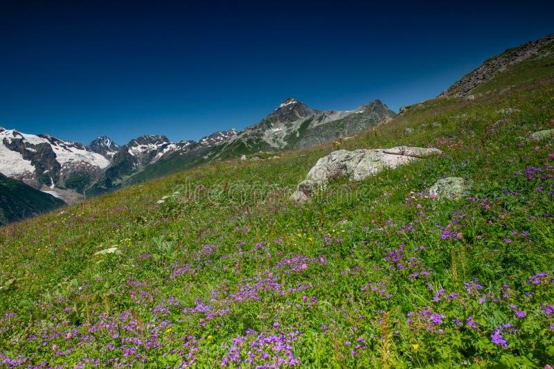 Красивый вид высокогорных лугов в горах Кавказа стоковое изображение rf