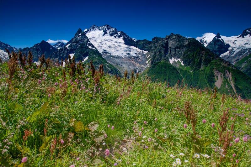 Красивый вид высокогорных лугов в горах Кавказа стоковое фото rf