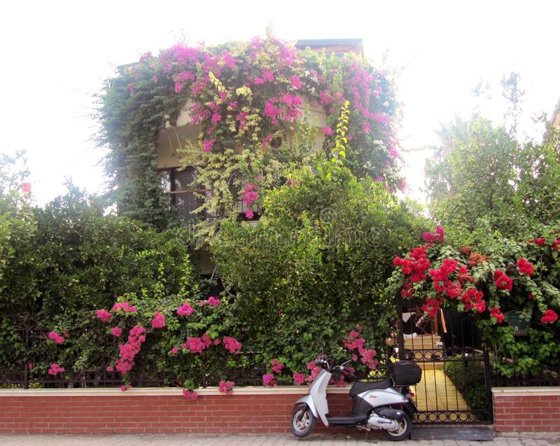 Красивый вид зацветая сада и motobike стоковое изображение rf