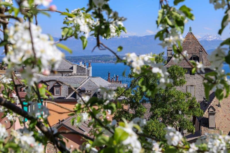Красивый вид на голубых озере Женев или Lac Leman и горах Альпов француза через зацветая дерево от Ньона стоковое фото