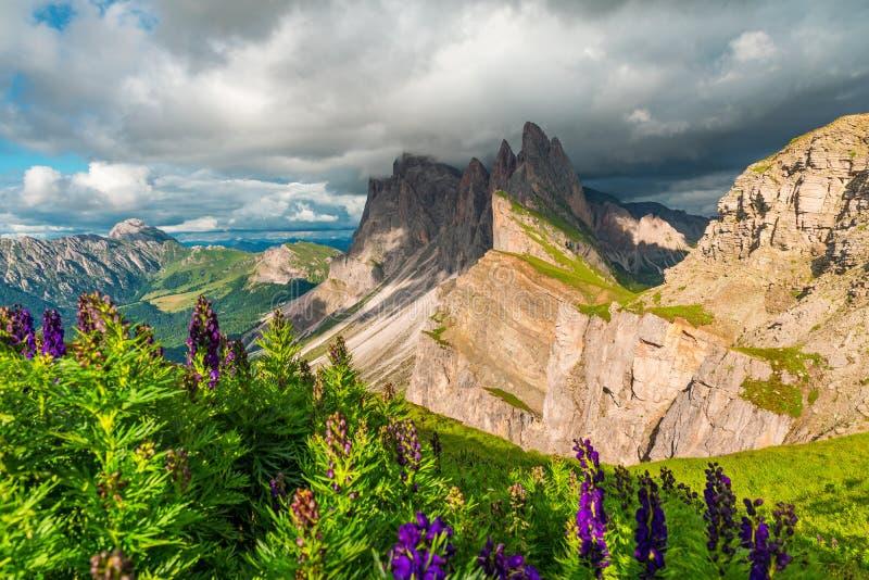 Красивый вид на горе Seceda с запачканными цветками на переднем плане перед штормом в доломитах, южным Тиролем, Италией стоковая фотография