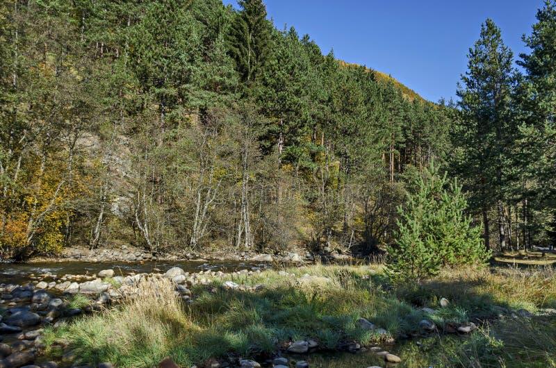 Красивый вид осенних леса и реки Iskar в горе Rila стоковое изображение rf