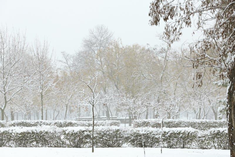 Красивый вид парка города покрытый со снегом стоковое изображение
