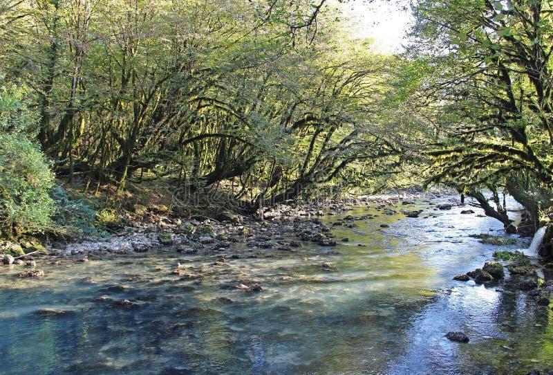 Красивый вид реки горы среди деревьев boxwood в осени Абхазия Красивейший ландшафт стоковые фото