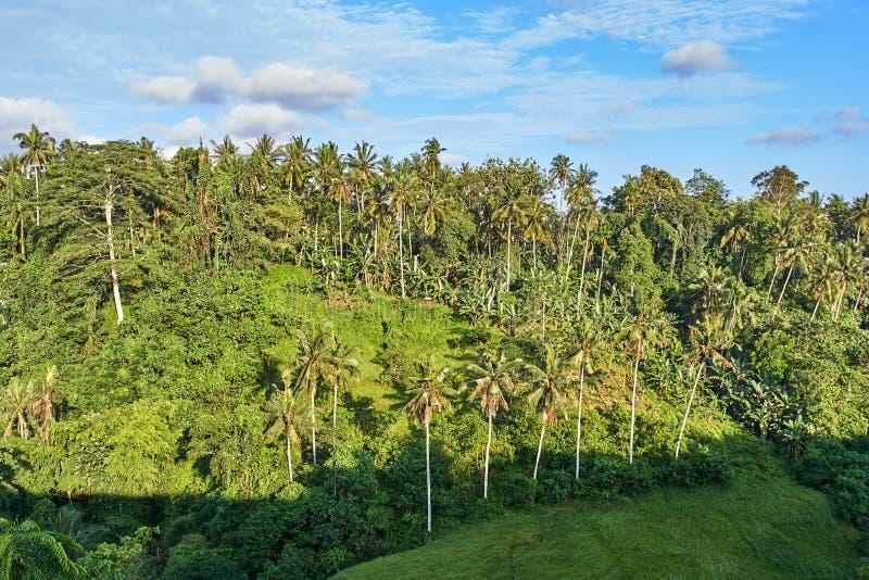 Красивый вид с воздуха джунглей Ubud на острове Бали стоковая фотография rf