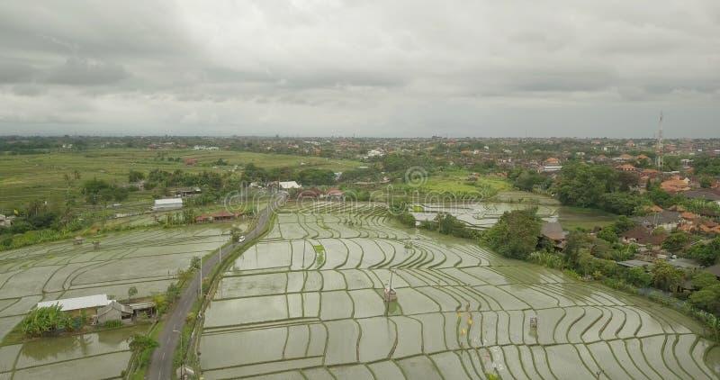 Красивый вид террас риса в Бали стоковое изображение rf