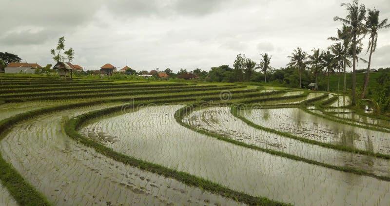 Красивый вид террас риса в Бали стоковые фотографии rf