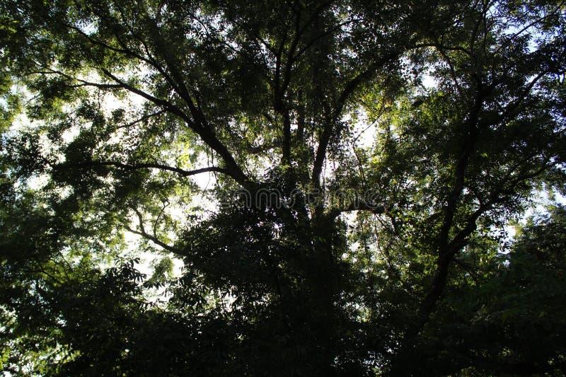 Красивый вид через деревья стоковые изображения rf