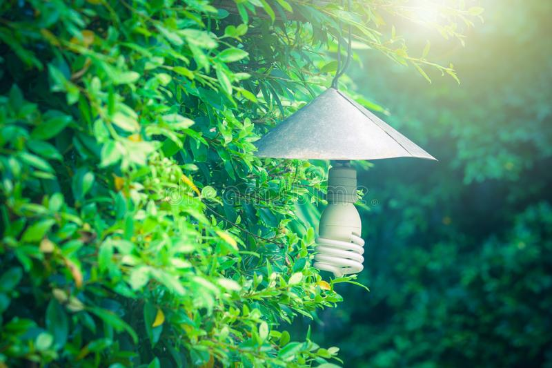 Красивый винтажный вид лампы или электрической лампочки на зеленом дереве ветвей в открытом саде стоковые фотографии rf