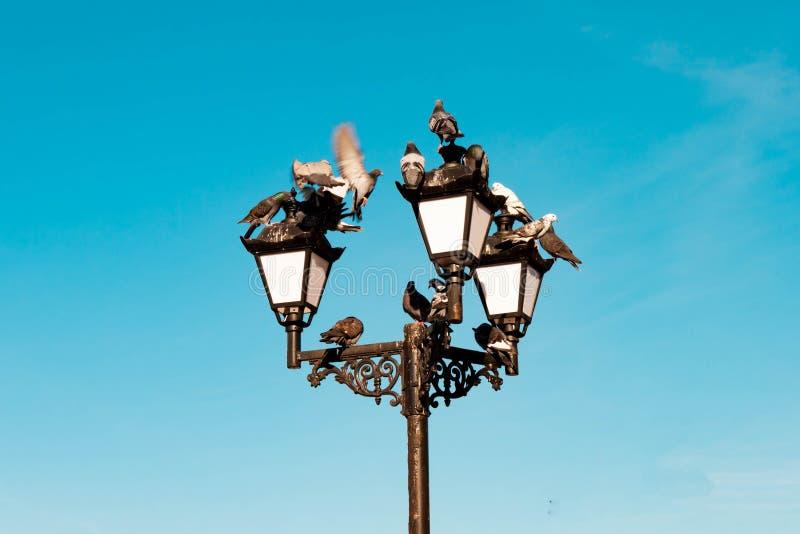 Красивый винтажный старый ретро электрический уличный фонарь с принимать и приземляться, усаживание, отдыхая голуби на предпосылк стоковое фото
