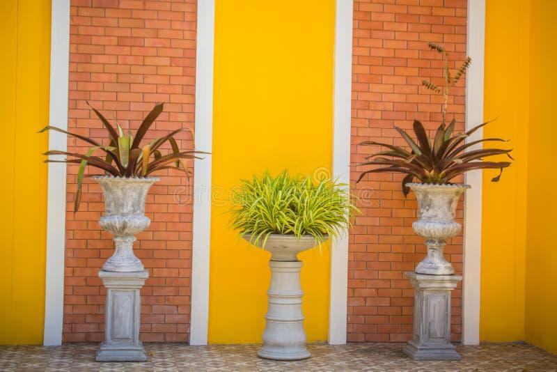 Красивый винтажный цветочный горшок на желтой предпосылке кирпичной стены с космосом экземпляра Очистите заштукатуренную кирпичну стоковое изображение rf