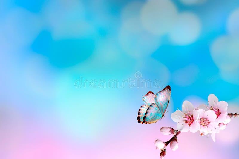 Красивый вишневый цвет Сакура с бабочкой весной приурочивает над голубым небом желтый цвет весны лужка одуванчиков предпосылки по стоковое фото rf
