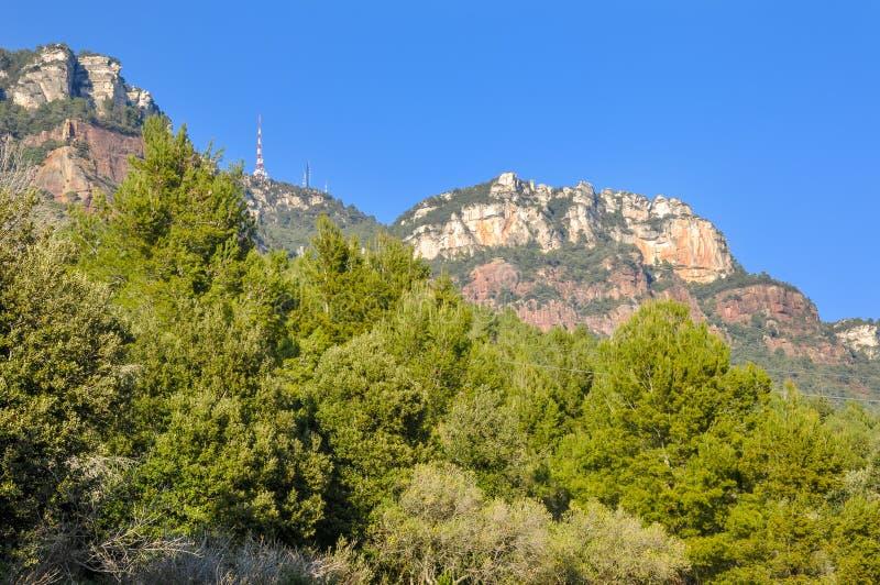 Красивый вид заросших лесом гор против безоблачного неба стоковое фото