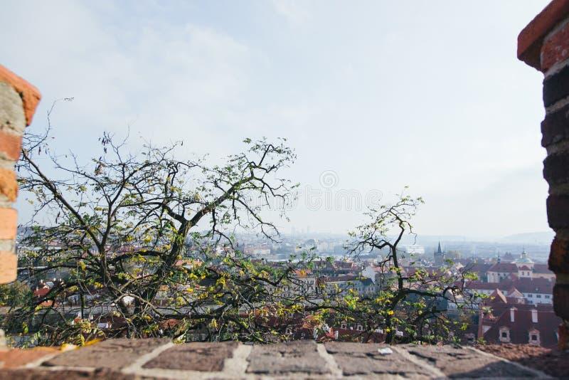 Красивый вид старого города Праги стоковые изображения rf