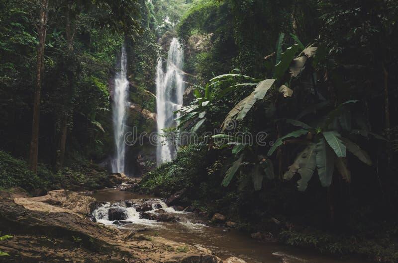 Красивый водопад в зеленом лесе в джунглях стоковое фото rf