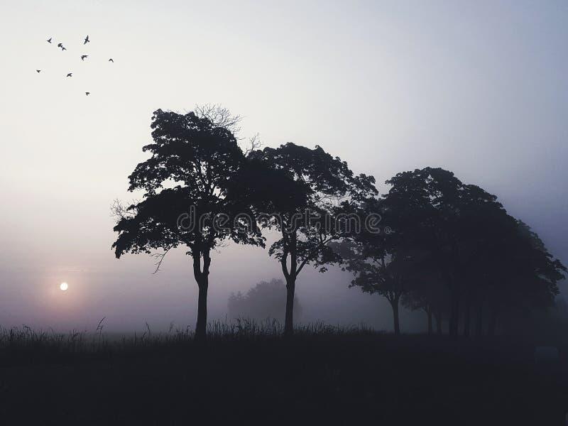 Красивый восход солнца, силуэт деревьев и летящие птицы стоковая фотография rf