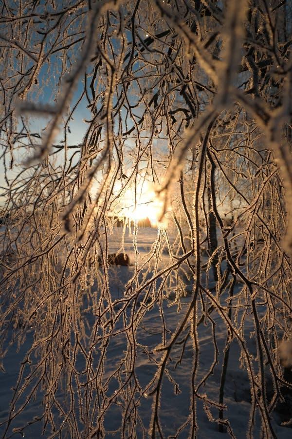 красивый восход солнца в зиме стоковые изображения rf