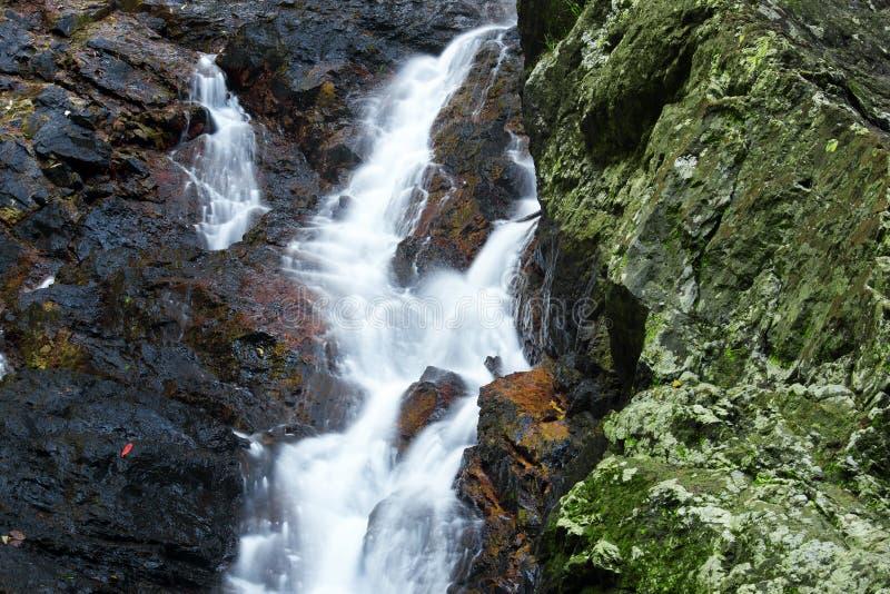Красивый водопад Kondalilla стоковое изображение rf