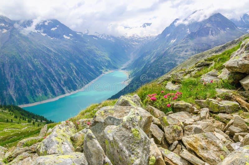 Красивый высокогорный ландшафт с цветками, Австрия стоковое изображение