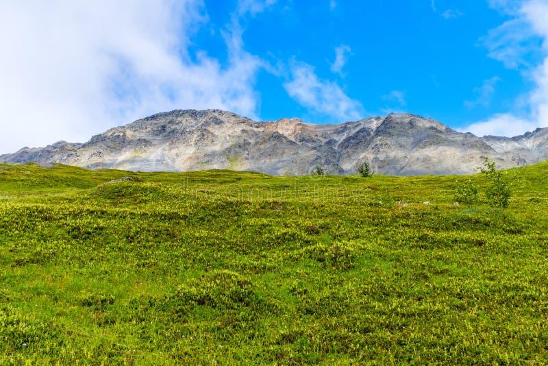 Красивый высокогорный луг на полуострове Kenai стоковые изображения rf