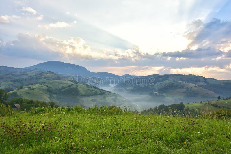 Красивый высокогорный луг с зеленой травой Восход солнца ландшафт на одичалых холмах Трансильвании Holbav Румыния Низкий ключ, те стоковая фотография rf