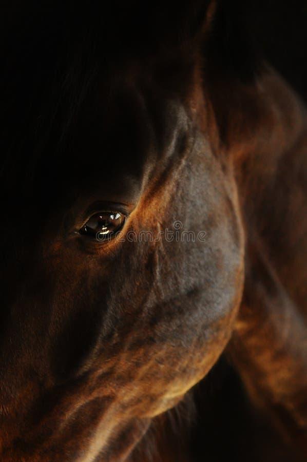 Красивый глаз лошади залива в конюшне стоковая фотография rf