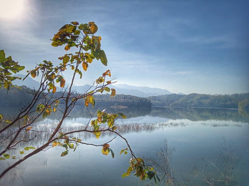 Красивый голубой пейзаж ландшафта озера Листья дерева и осени на переднем плане Солнечный свет утра над озером Спокойствие стоковые фото